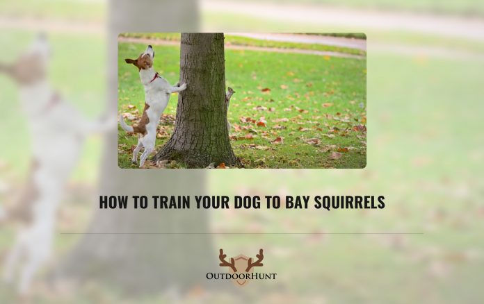 How to Train Your Dog to Bay Squirrels