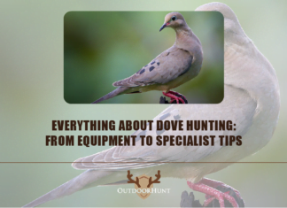 dove-hunting-outdoorhunt